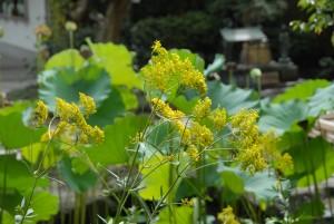 8月30日撮影:境内の花々