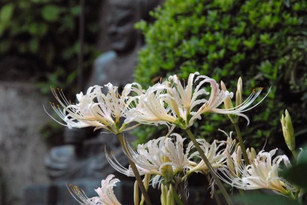 9月18日撮影:境内の花々