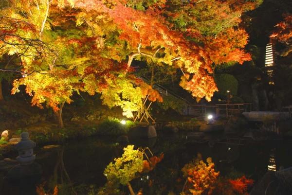 平成27年度は下記日程で紅葉ライトアップ(夜間特別拝観)を開催いたします。 夕暮れと共にゆっくりとライトが点灯されていきます。明るいうちから境内へお入り頂き、美しく色づいた木々が幻想的な風景に移り行く様を見届けてみてはいかがでしょう。