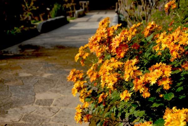 境内の花々と紅葉状況