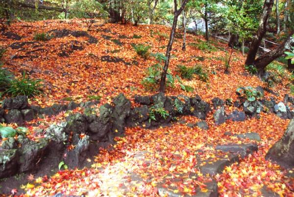 境内の花々と紅葉情報