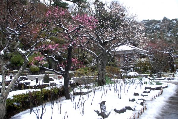 0116雪の日 梅