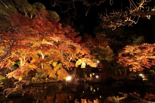 【終了しました】平成29年度 紅葉ライトアップ(夜間特別拝観)