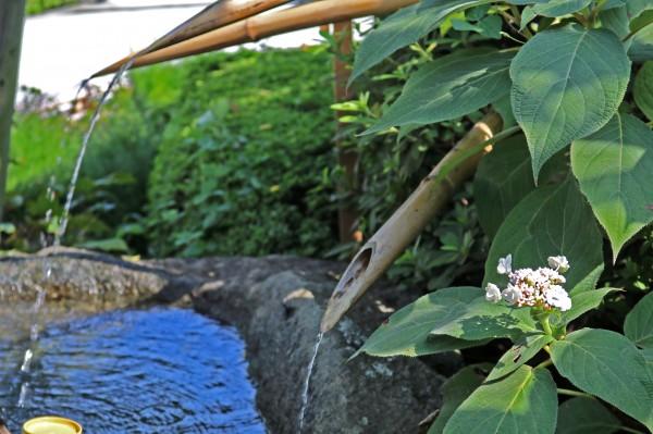 タマアジサイ水屋