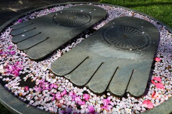 ソメイヨシノの下の仏足石