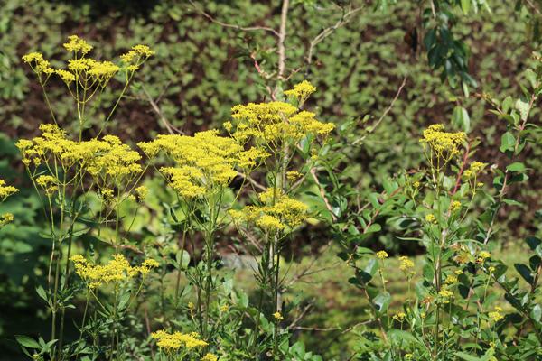 境内の花々 開花状況