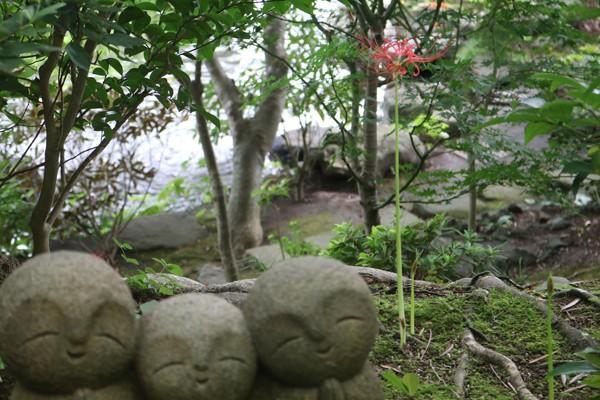 ヒガンバナ 咲いている個体