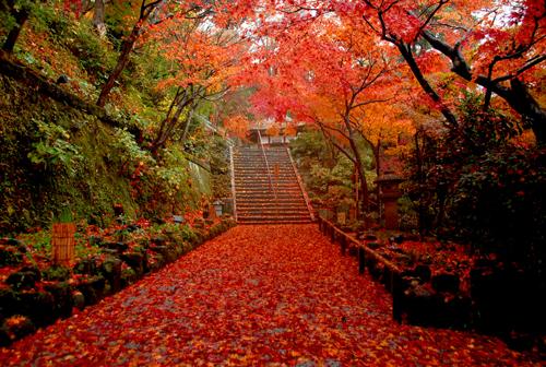 【締切迫る】第十三回鎌倉芸術祭