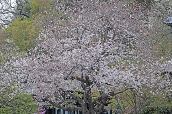 花散歩 境内の花々