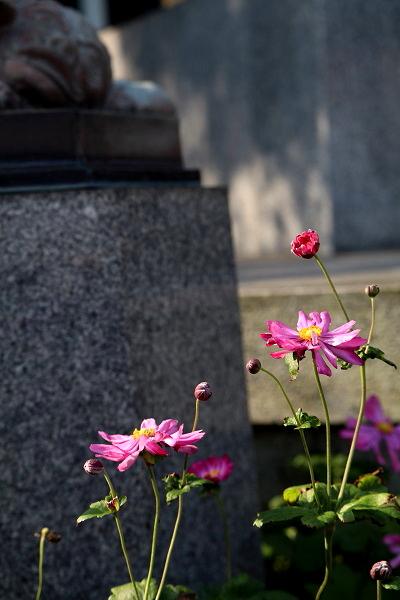 紅葉情報・境内の花々