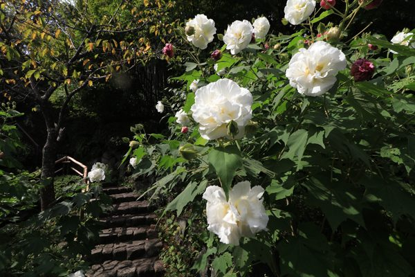花だより 境内の花々